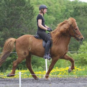Intermediate Horse Class At Solheimar Farm 2019 Firmakeppni