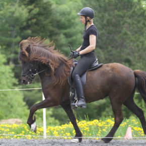 Green Horse Class at Solheimar Farm 2019 Firmakeppni