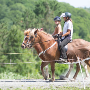 Pairs In Harmony at Solheimar Farm 2019 Open Sanctioned Show