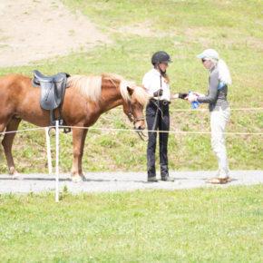 VIH Intermediate Horse 4 Gait at Solheimar Farm 2019 Open Sanctioned Show