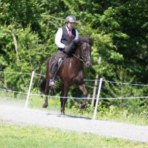 VGH Green Horse Four Gait at Solheimar Farm 2019 Open Sanctioned Show